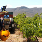 Fairtrade Africa: Local Wineries with a Cause