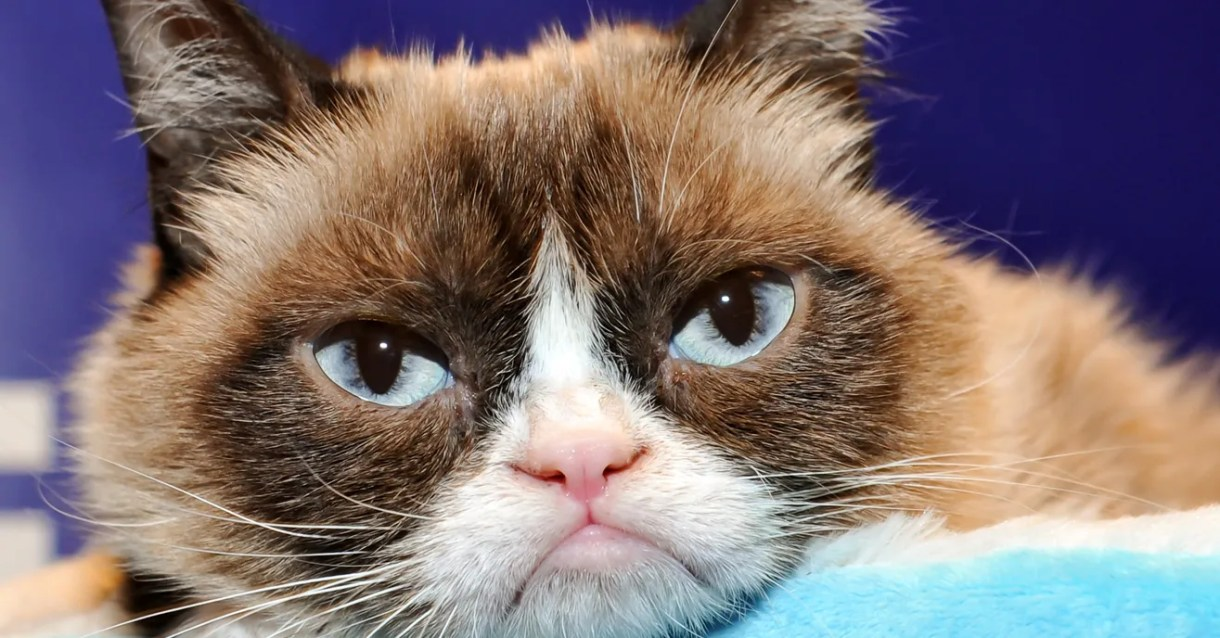 So Long to Grumpy Cat, Amazon's Special Warehouses, and More News 2