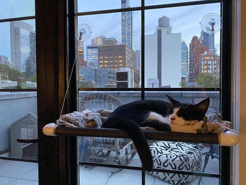 Gatto che dorme sul lettino