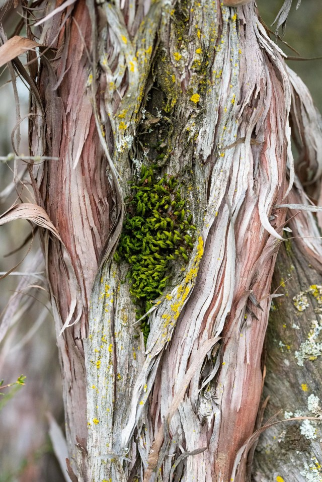 Image may contain Plant Tree and Tree Trunk