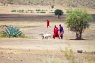 Massajer med får, Tanzania