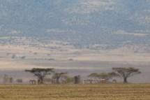 Luften dallrar i hettan, Tanzania