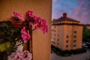 Sommarkväll med pelargoner på balkongen.