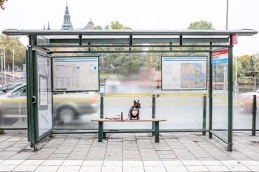 Valter väntar på bussen till Kaknästornet.