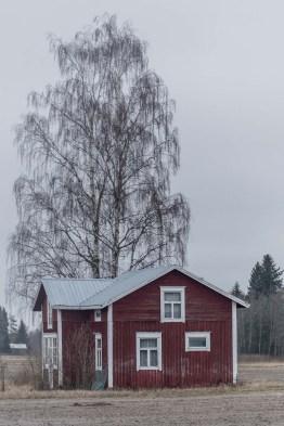 Huset. Björken.