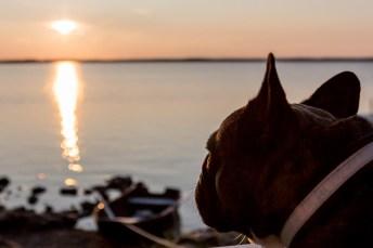 Blickar ut över solnedgången.
