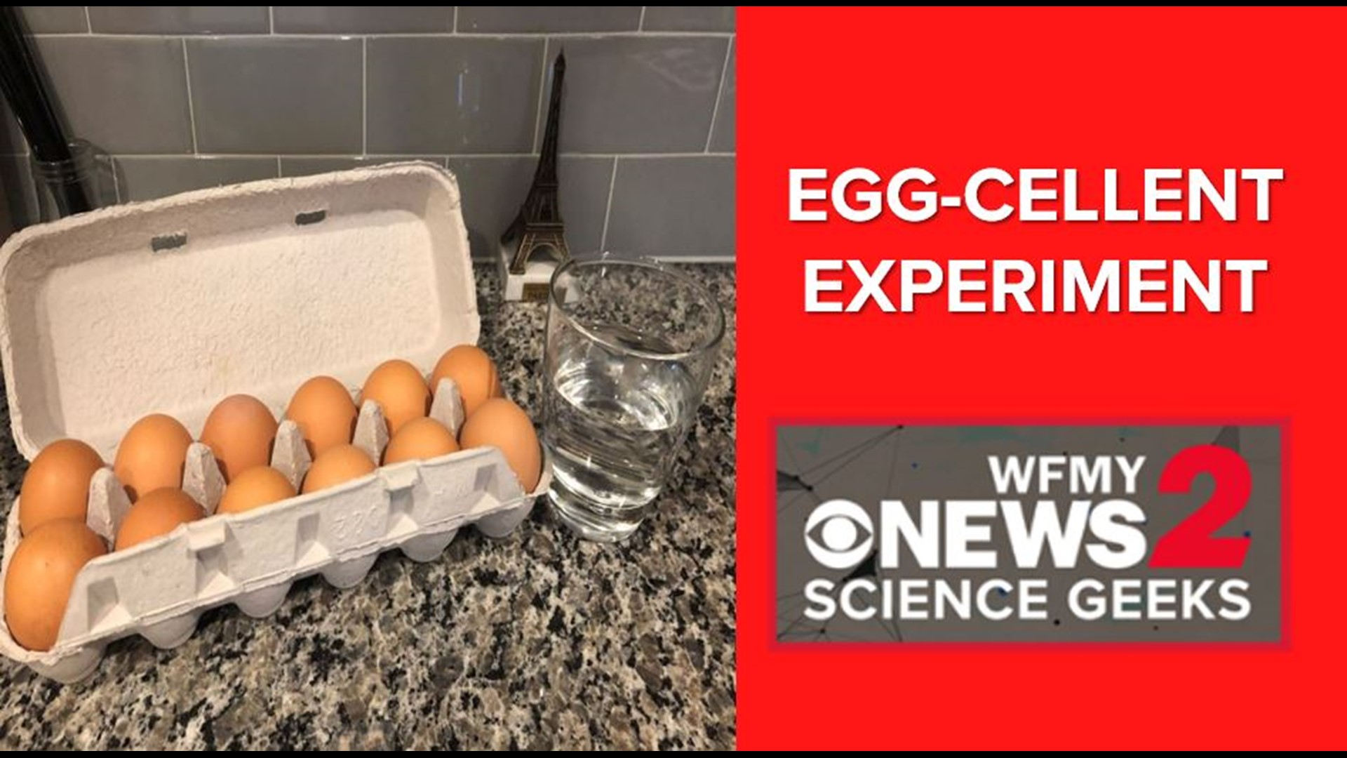 All You Need Is An Egg For These Easy Science Experiments