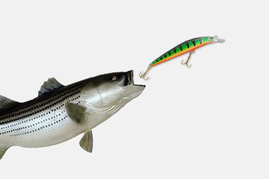 en bild med en fisk som fångar ett fiskedrag