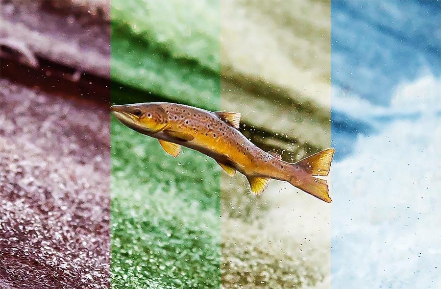 fiske på vid olika årstider