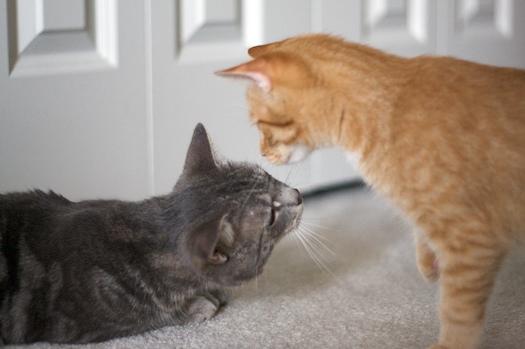 Watson Meets Dexter