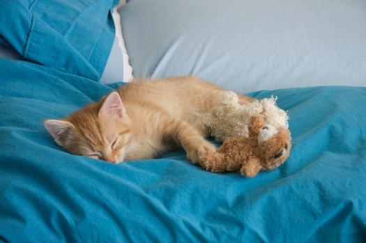 Watson with Lambie & Bear
