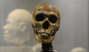 Un cráneo de un Neandertal (AP)