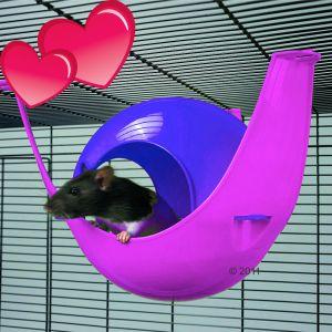 Sputnik rose et violet