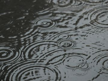 Circular patterns created in a puddle as rain falls.