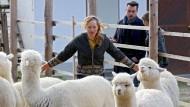 "ARD-Krimi ""Steirerwut"": Achtung, Alpaka"