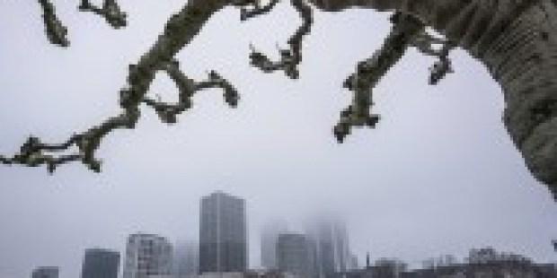 Stadt der Zukunft: Die Birke im Windkanal