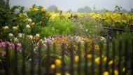 Ein Garten in Sachsen im September