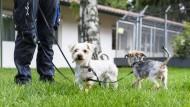 Max und Moritz: Die beiden Yorkshire-Terrier wurden im Tierheim Stuttgart gepflegt, nachdem sie ausgesetzt worden waren. Die Stadt hofft, dass durch die neue Regel mehr Menschen einen Hund aus den überlasteten Tierheimen nehmen.