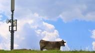 Eine Kuh weidet auf einer Wiese neben einer Mobilfunkantenne.