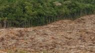 Der menschengemachte Rückgang der Waldfläche ist nur ein Faktor für die Austrocknung des Regenwaldes.