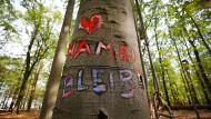Lohnt es sich, den Hambacher Forst zu erhalten?