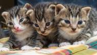 """""""Sachkundenachweis"""": Grüne wollen Haustiere besser schützen"""