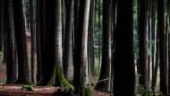 Hat schöne Winterwanderwege: der Wald im Spessart