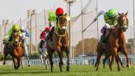 Erfolgreicher Winter: Adrie de Vries bei einem Sieg in Abu Dhabi