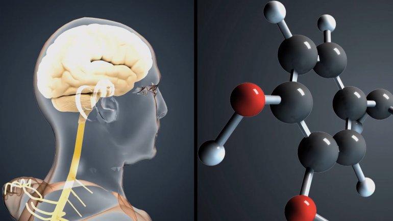 Galo Soler Illia: Cada vez se conocen más y más las bases moleculares de muchísimas enfermedades