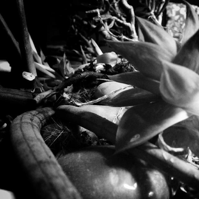 """Jungel"" #nexus5 #snapseed #monochrome #mobilephotography"