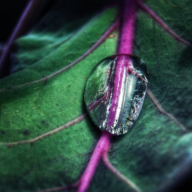 Water on leaf. #droplets #leaf #water