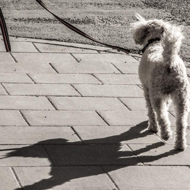 hund.foto: BelleBlue © Photo 2014