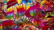 Zuviel davon ist nicht gut: Zuckerkristalle unter dem Mikroskop, hier Saccharose.