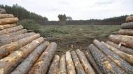 """Gefällte Bäume auf dem zukünftigen Gelände der von Tesla geplanten """"Gigafabrik"""" in Grünheide, Brandenburg"""