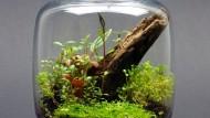 Wie eine Palmeninsel: Ein Waldglas braucht robuste Moose und Gräser, Wärme und einen Platz an der Sonne.