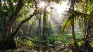Messbare Nachhaltigkeit bei Unternehmen: Deutschland abgehängt