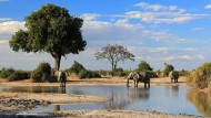 Vielfältig und traumschön: Landschaft mit Elefant und Wasserloch in Savuti, Botswana.