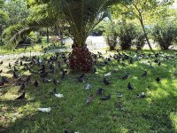 Pigeons congregate in the shade during Londons heatwave of 2003. Good thinking!