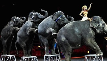 Send in the clowns, because the elephants are done