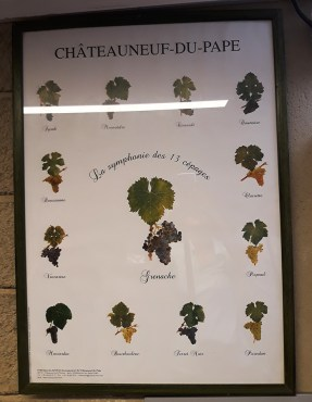 chateauneuf du pape grape varieties