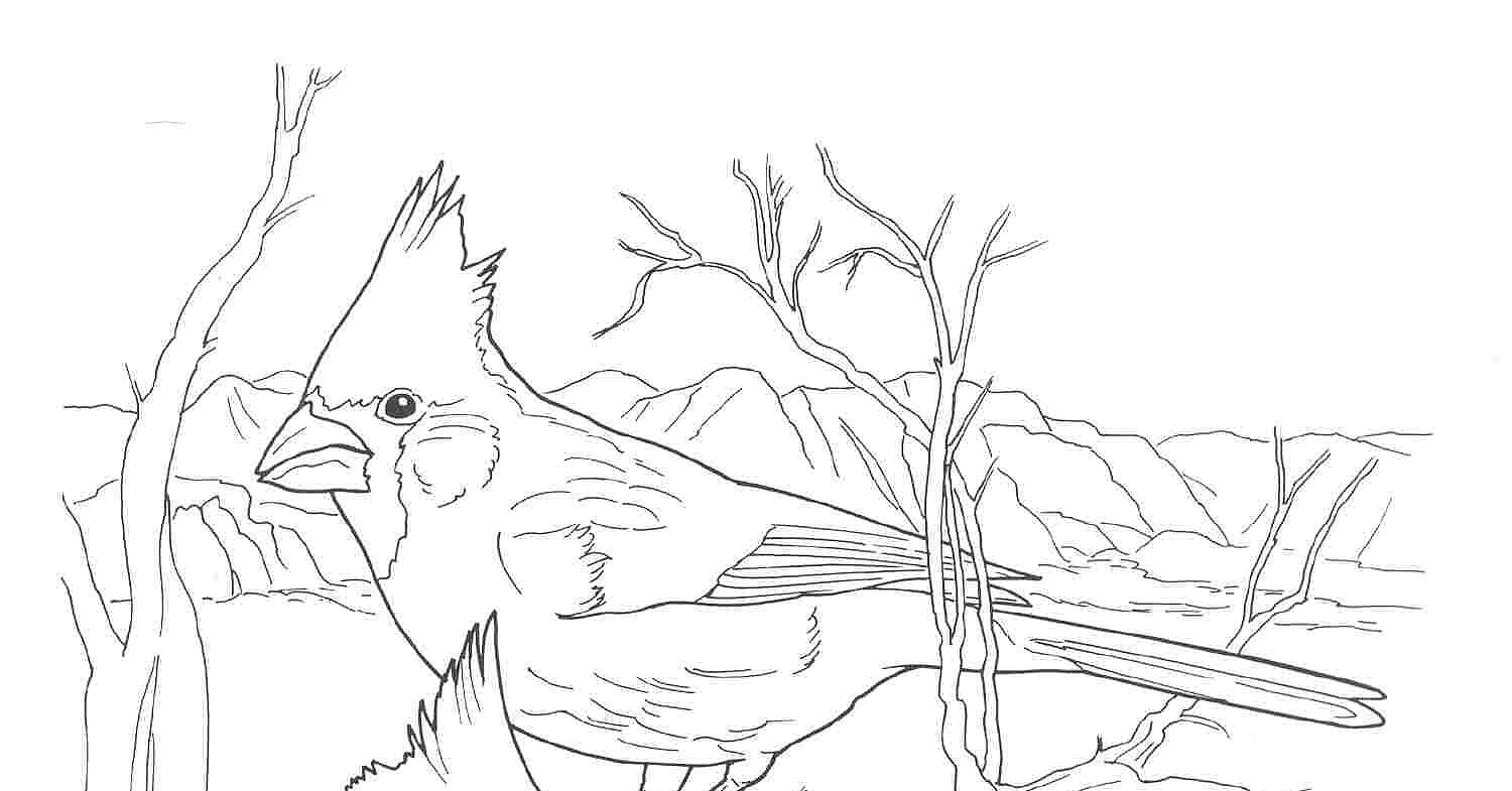 Cardinals Coloring Pages