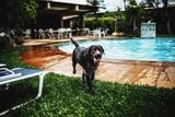 Your Day Will Be Infinitely Higher With These 18 Movies of Canine Swimming