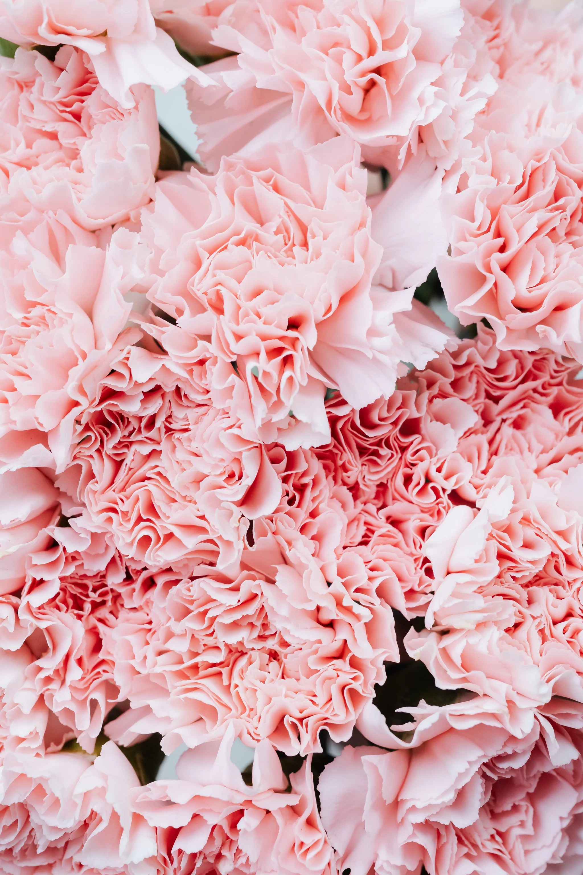 Pink Flower Iphone Wallpaper The Best Ios 14 Wallpaper Ideas That Ll Make Your Phone Look Aesthetically Pleasing Af Popsugar Tech Photo 18