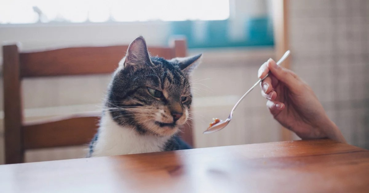 Yes, Your Cat's Behavior Will Most Likely Change With Age  2 Vets Explain Why