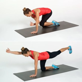 Image result for bird dogs exercise