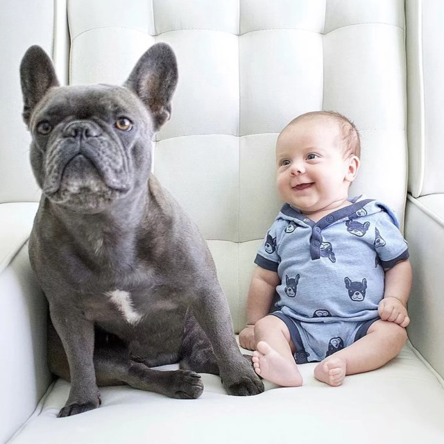 pictures of french bulldogs and babies | popsugar family