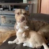 A Cat Was Having fun with a Tub From His Canine Pal When Issues Took a Hilarious Flip