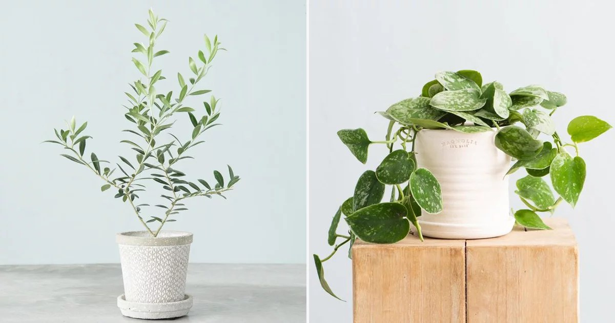 Joanna Gaines's Online Store Is Selling Her Favorite Houseplants, and They All Ship For Free!