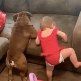 This Video of a Little Girl Attempting - and Failing - to Get on a Couch With Her Dog Is Adorable