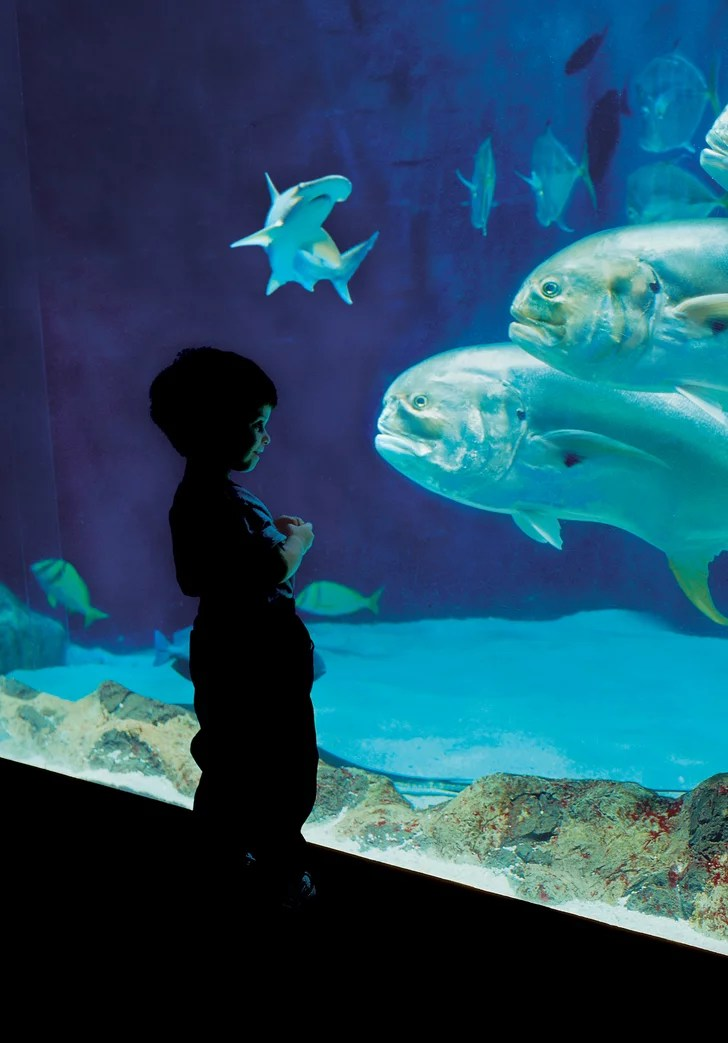 Tennessee Aquarium Chattanooga TN Best Aquariums For